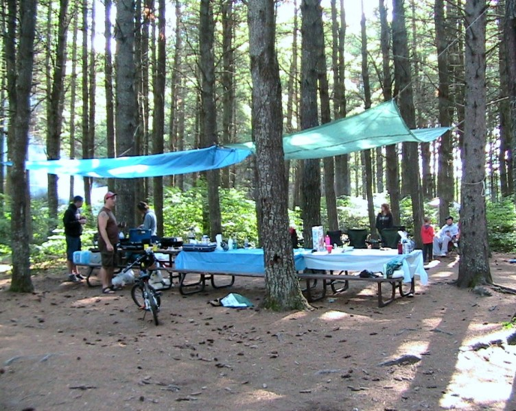 Tall conifers provide a large canopy over Pog Lake campgrounds