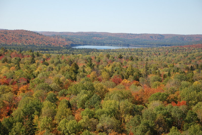 Fall colours in Algonquin Provincial Park Ontario