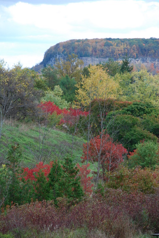 Halton conservation fall colour