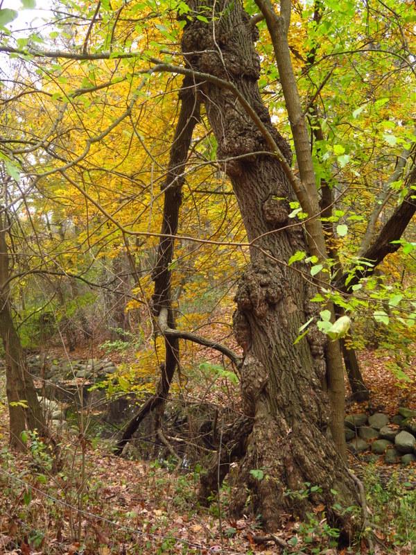 Spring Creek nature trail - High Park - Toronto