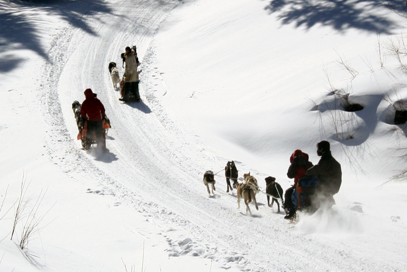 Dogsledding - chocpaw expedition - algonquin provincial park - ontario