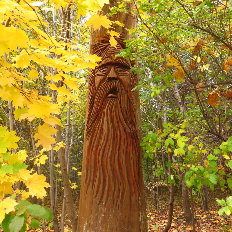 tree near the Grenadier Restaurant - High Park - Toronto