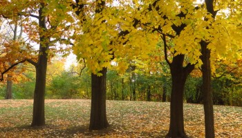 Autumn in High Park: Nature in the heart of Toronto city