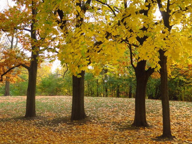 High Park - Toronto - Fall colour