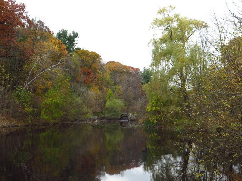Ridout Pond - High Park - Toronto