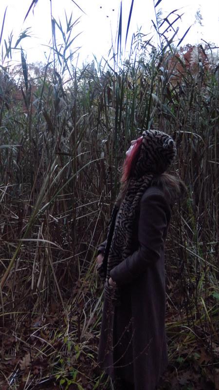 Tall reeds - Grenadier Pond - High Park - Toronto
