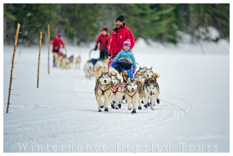 Winter dance dogsled tours at Haliburton Highlands, Ontario