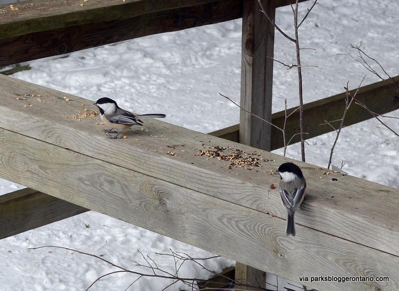 Bird feeding at MacGregor Point Provincial Park