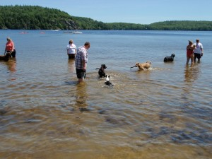 Pet friendly swimming area Bon Echo provincial park