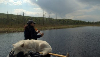 Algonquin Diaries: Paddling the Petawawa River