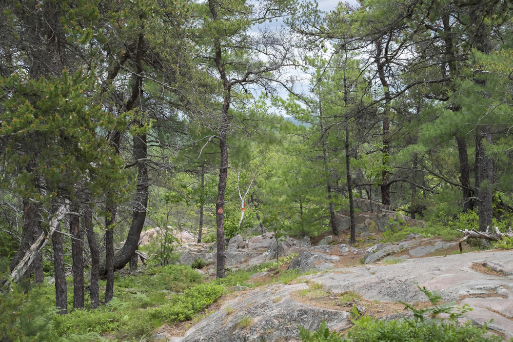 Granite Trail, Killarney Provincial Park