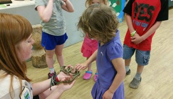 Kids experiencing snakes at MacGregor Point Park