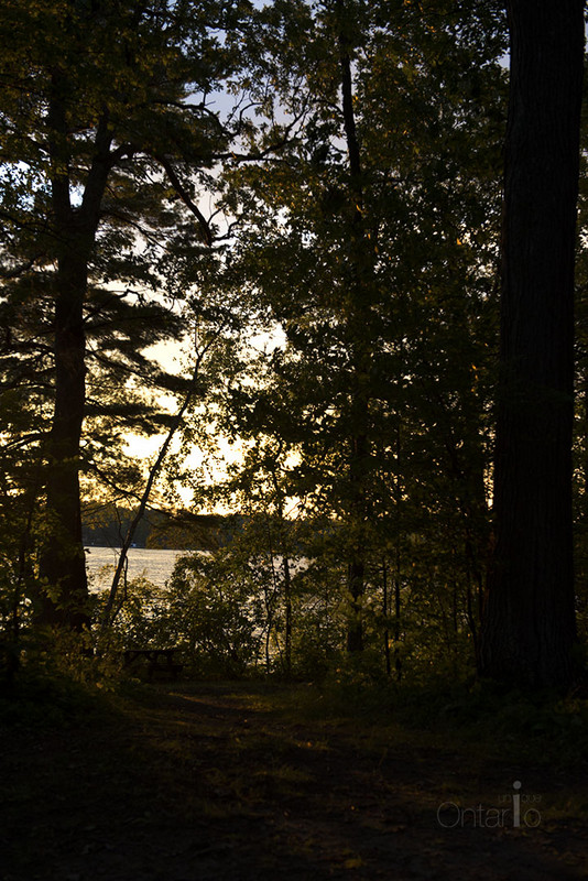 Sunset through trees, Thousand Islands National Park