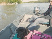 Life jackets are always a good idea for little dogs, even in shallow water