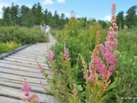 Boardwalks Take You Through Diverse Bog Ecosystems