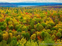 Colourful Tree Tops in Algonquin during Fall