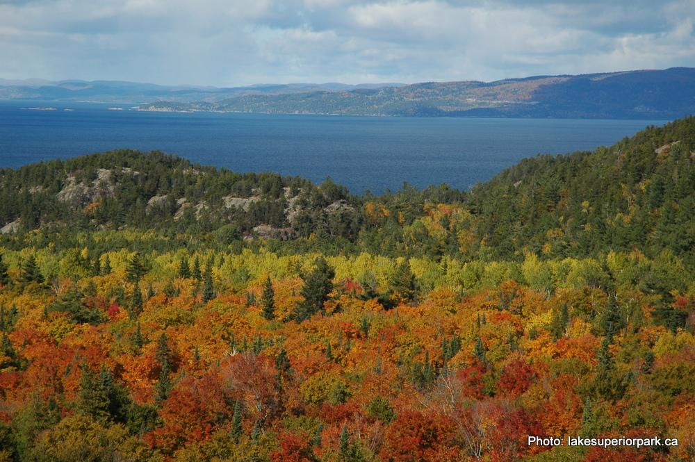 Autumn Fall Foliage Lake Superior Provincial Park