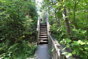 Rushing River Lower Rapids Trail