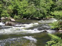 The lower rapids