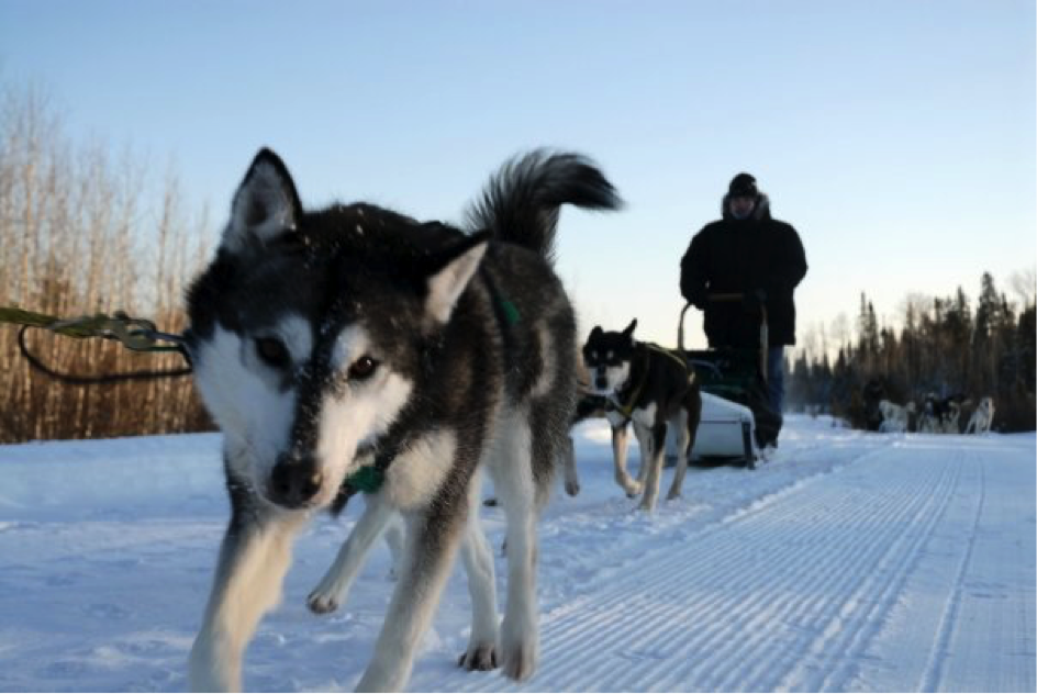 Boreal Journeys dog sledding