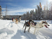Snow Forest Adventures dog sledding