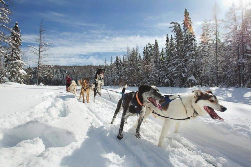 Snow Forest Adventures dog sledding